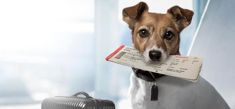 Bolsos de cabina para perros