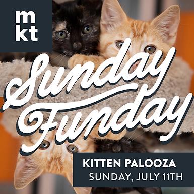 SUNDAY FUNDAY: KITTEN PALOOZA
