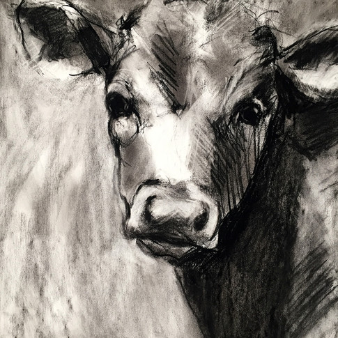 Angus (2019) sold