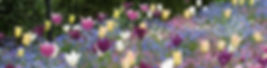 9-5-8 5 tulips and forget-me-not 2.jpg