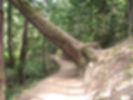 06-05-10 tree over path.jpg