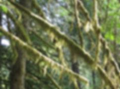 06-05-10 moss.jpg