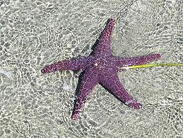 8-7-21 starfish patterns.jpg