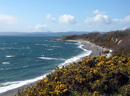7-3-20 beach and gorse.jpg