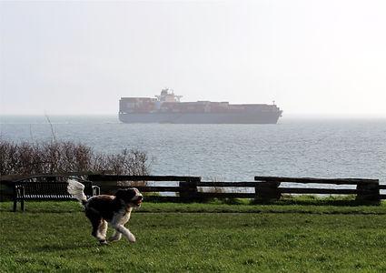 v1-28 doggie fetch.jpg