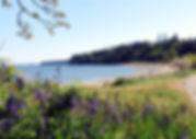 1a 4-20 flowers and beach.jpg