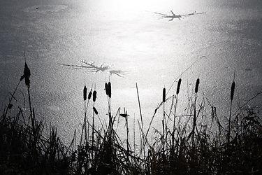 c1-06 - Ice on Buttertubs Marsh.jpg