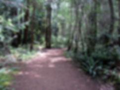 13-06-15 5 forest.jpg