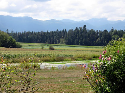 Silver meadows 2.jpg