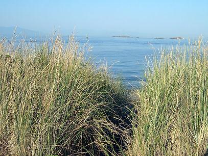 20 grass beach.JPG