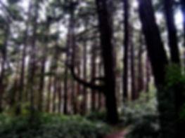 09 forest.JPG