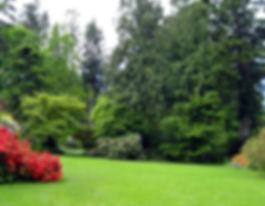 8-5-25 2 lawn.jpg