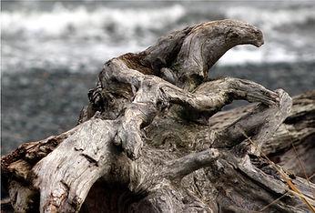 1-25 driftwood 2.jpg