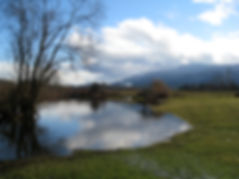 c1-06 flooded field.jpg