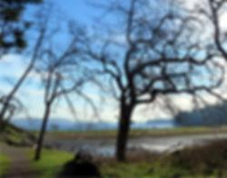 na2-9 oaks and ocean.jpg
