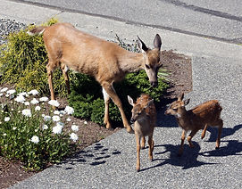 8-6-15 mother and twins.jpg