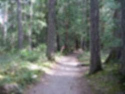 06-05-10 path forest.jpg