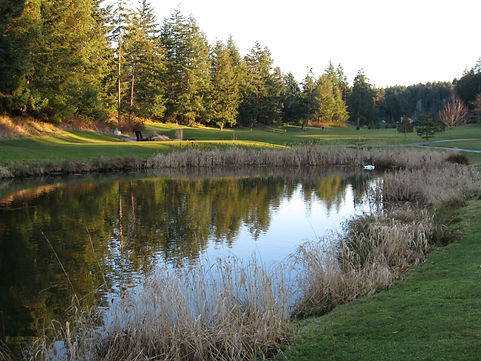 n2 golf course pond.jpg