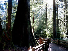 3-18 cathedral grove.jpg