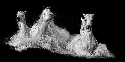 Les chevaux de Poséidon