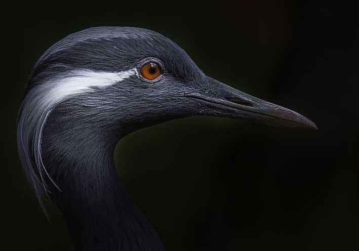Tête oiseau fond noir