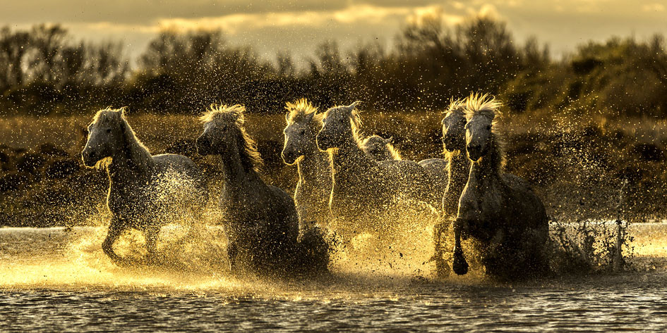 Chevaux Camargue color 5