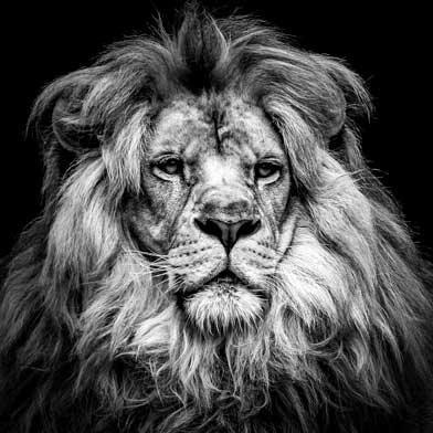 Richard, cœur de lion