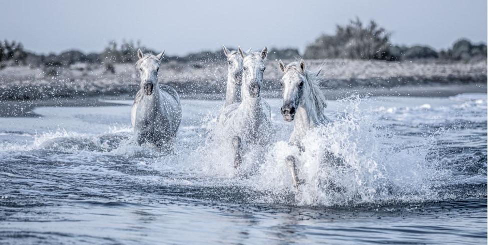chevaux mer