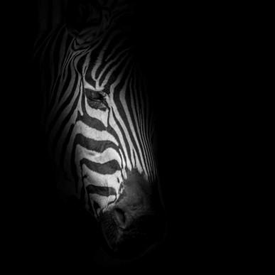 De lignes et d'ombres