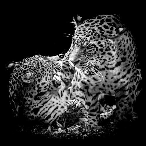 Jeux de jaguards
