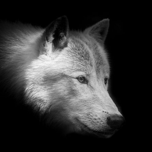 Waya (Loup en cherokee)