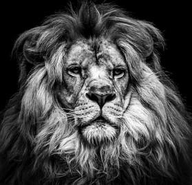 Richard, coeur de lion