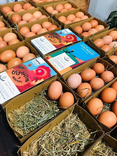 Huevos Orgánicos de Productores Campesinos