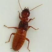 Termites pest control exterminator in Charleston