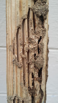 Termites, Summerville, wood destroyers, wood rot