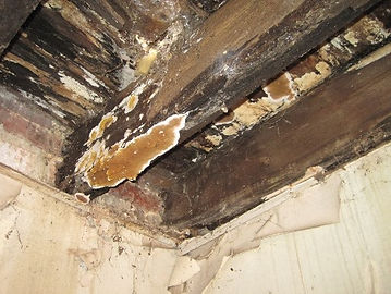 Dry rot Fungus pest control exterminator in Charleston