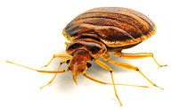 Bed Bugs are biting in Charleston