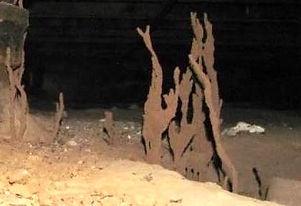 Termite pest control exterminator in Charleston