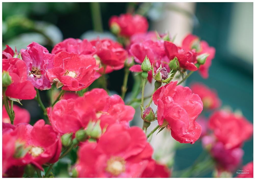 Guillaume Comte Photographe Le Poudrier Mariage Nature Fleuri Limoges Limousin