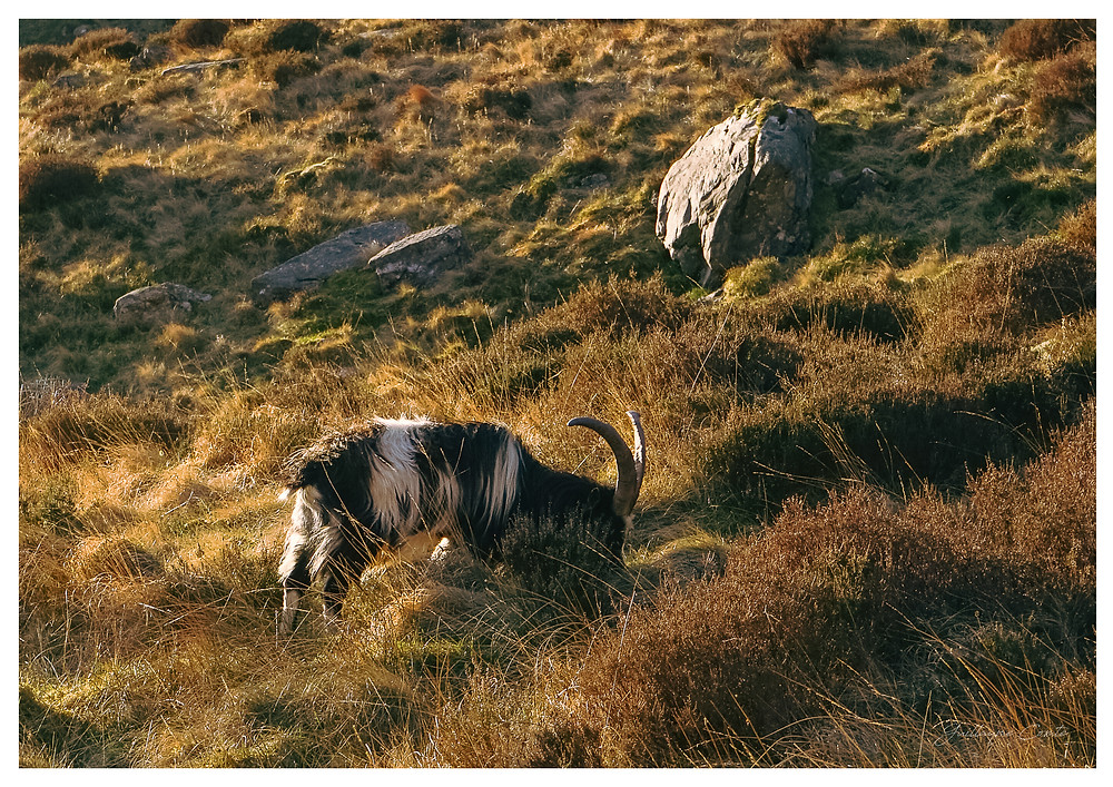 guillaume comte photographe wales snowdonia nature limoges landscape sunrise levé du soleil
