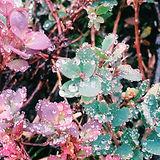 Arctic flowers.jpg