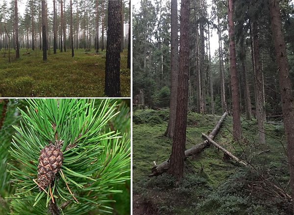 Figure4_CliCNord_D22_Sweden1_forests.jpg