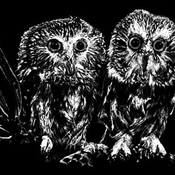 baby owls.jpg