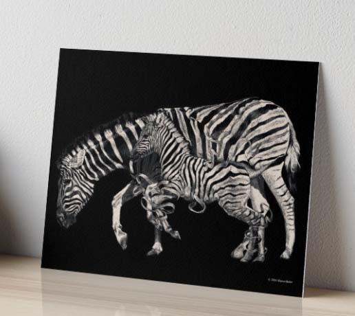 zebra 4.jpg