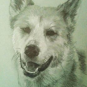 02 dog.jpg