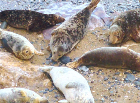 Seal watching in North Wales