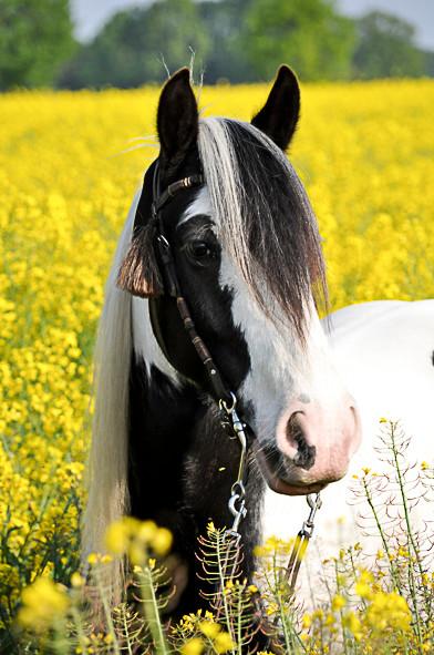 Pferdefotografie-085.jpg