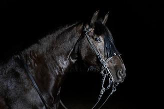 Pferdefotografie-075.jpg