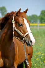 Pferdefotografie-081.jpg