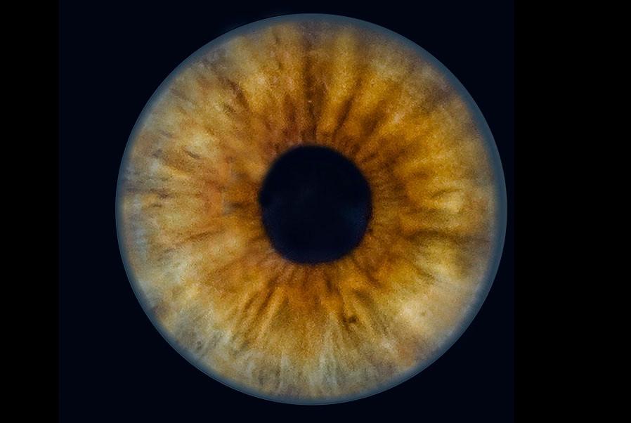 3-Auge.jpg